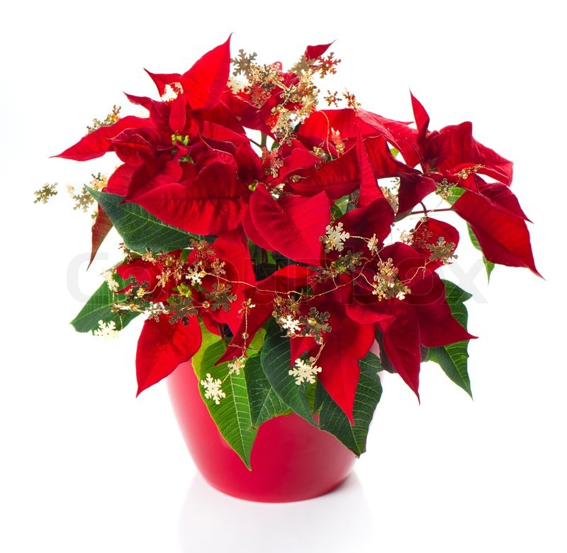 11 - Christmas Flower Decorations